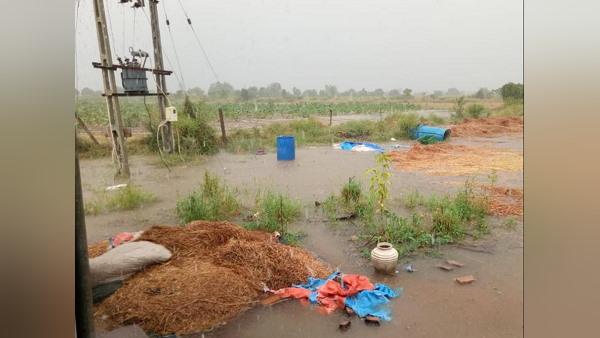 विदा होते मानसून ने ली करवट, गुजरात की 86 तहसीलों में खूब पानी बरसा, मूंगफली-सोयाबीन की फसलें हुईं तबाह