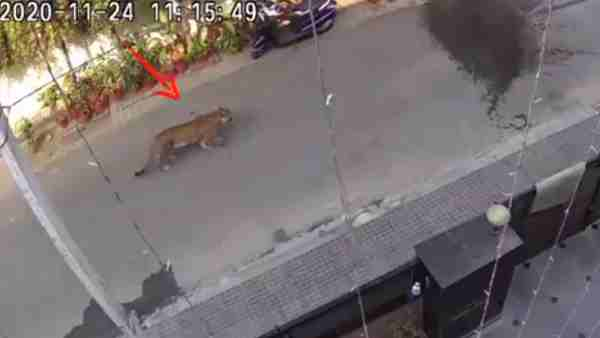 ये भी पढ़ें:- गाजियाबाद के राजनगर में टहलता दिखा तेंदुआ, CCTV में हुआ कैद