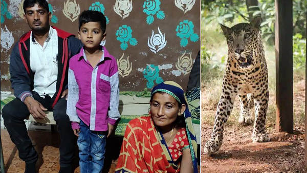 खेत में 8 साल के बेटे पर टूट पड़ा तेंदुआ, मां ने धूल-मिट्टी मारकर चंगुल से छुड़ाया, हो रही तारीफ