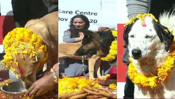 दिवाली पर यहां होती है कुत्तों की पूजा, 5 दिनों तक मनाया जाता है यह त्योहार , देखें तस्वीरें