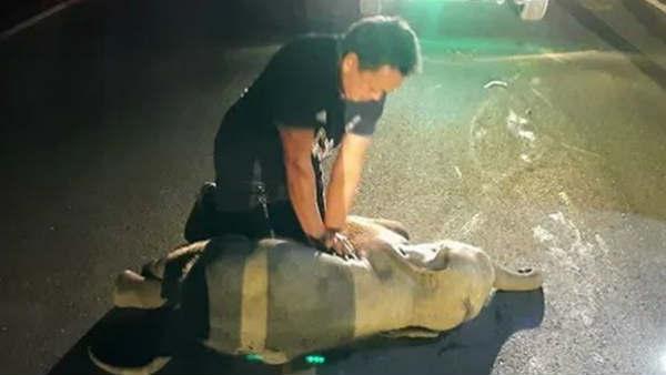 सड़क हादसे में घायल हुआ नन्हा हाथी, एक शख्स ने ऐसे बचाई जान, VIDEO देख छलक उठेंगे आंसू