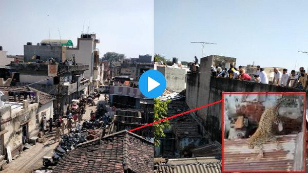VIDEO: तेंदुए से शहर में मची अफरा-तफरी, पकड़ने आए वनकर्मी घायल, 6 घंटे बाद ड्रोन से हुआ काबू