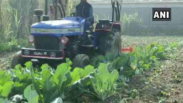 UP: एक रुपए किलो बिकी गोभी तो किसानों ने खेत में चला दिया ट्रैक्टर, लाखों की फसल की नष्ट