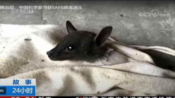 इसे भी पूरा करें- Video:चीन की वुहान लैब के वैज्ञानिकों का कबूलनामा, गुफा में सैंपल लेते वक्त संक्रमित चमगादड़ों ने काटा