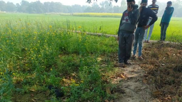 six crows found dead in amethi uttar pradesh