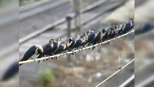 गुजरात में 14 साल पहले फैला था बर्ड फ्लू, अब यहां काफी पक्षी मरे, पोल्ट्री फार्मों के संचालक भयभीत