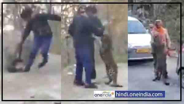 ये भी पढ़ें:- VIDEO: अचानक खूंखार तेंदुआ जब बन गया पालतू बिल्ली, ये झपट्टा वार का नहीं...दुलार का
