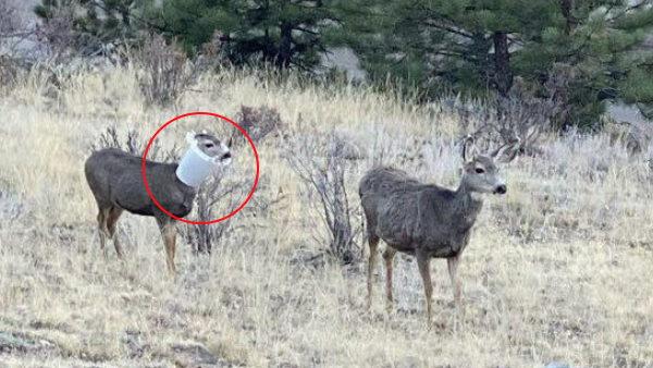 शख्स ने बचाई 'बर्ड फीडर' में फंसे जंगली हिरण की जान, फोटो हुई वायरल तो लोगों ने कहा- थैंक्यू