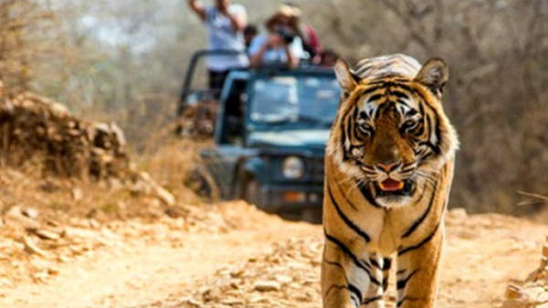 SC stayed order of plying private buses in core area of tiger reserve