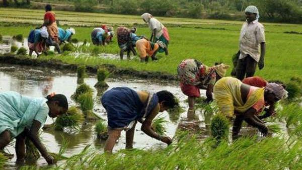 मध्यप्रदेश सरकार किसानों के लिए खोल रही है कैंटीन जहां सम्मान कार्ड से मिलेगा सस्ता सामान