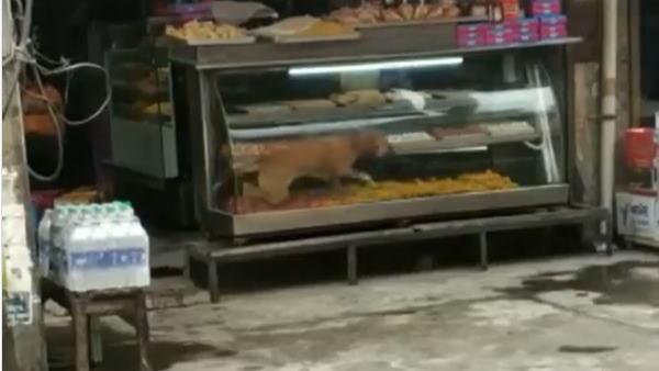 मिठाई की दुकान के काउंटर में घुसा कुत्ता, फिर जो हुआ वो देखने लायक, वीडियो देख हंसी नहीं रोक पाएंगे