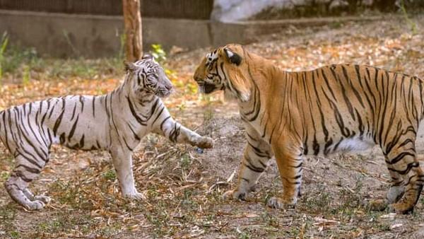 1 अप्रैल से खुल जाएगा कोरोना के चलते एक साल से बंद दिल्ली का चिड़ियाघर, टिकट होगा और महंगा