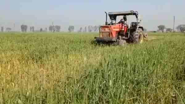 ये भी पढ़ें:- मथुरा: चार एकड़ खेत में खड़े गेहूं पर किसान ने चलाया ट्रैक्टर, कृषि कानूनों का कर रहे थे विरोध