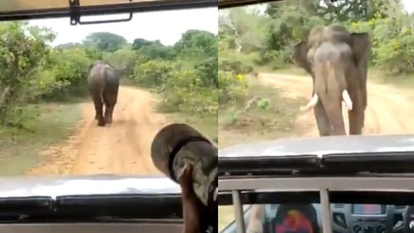 Video: फोटो खींचने के लिए पीछा कर रहे शख्स को हाथी ने देखिए कैसे चखाया मजा