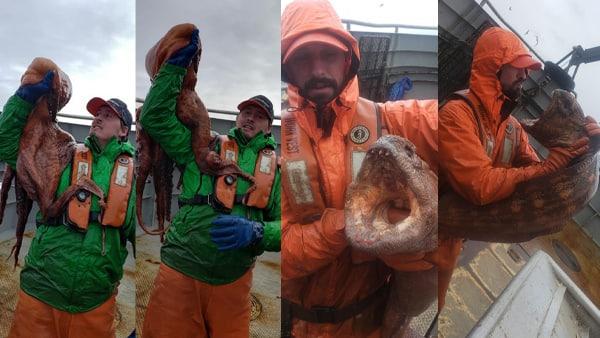समंदर में मछली पकड़ रहा था मछुआरा, अचानक हाथ लगा 'समुन्द्री राक्षस', थोड़ी सी चूक से जाती जान!