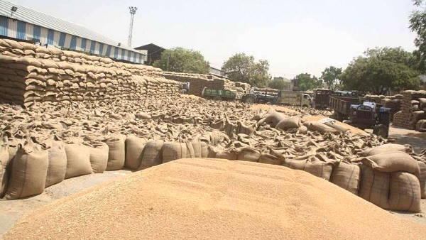 हरियाणा सरकार का किसानों के हित में फैसला- 10 दिन पहले शुरू होगी गेहूं की सरकारी खरीद