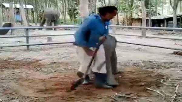 Video: मालिक को मेहनत करता देख नन्हे हाथी को सूझी शैतानी, मस्ती देख भूल जाएंगे सारी टेंशन