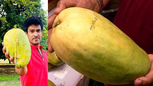 <em>यह भी पढ़िए: ये है सबसे बड़ा आम, नाम है 'नूरजहां', 1200 रुपए में बिक रहा एक, 3 किलो से भी ज्यादा होता है इसका वजन</em>
