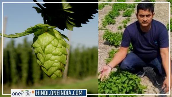 Amresh Singh : बिहार के किसान ने उगाई हॉप शूट्स सब्जी, जानिए Hop Shoots क्यों बिकती है ₹ 1 लाख KG