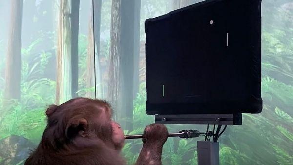 Elon Musk की कंपनी का चमत्कार, सुपर चिप लगाते ही बंदर खेलने लगा वीडियो गेम, इंसानों पर जल्द होगा ट्रायल!