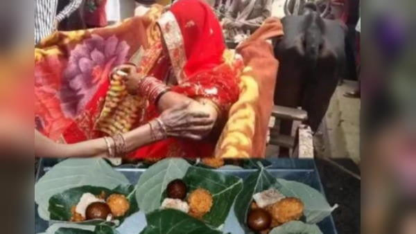 अनोखी शादी : बैलगाड़ी में आई बरात, पत्तों पर खाना और पौधे देकर हुई विदाई