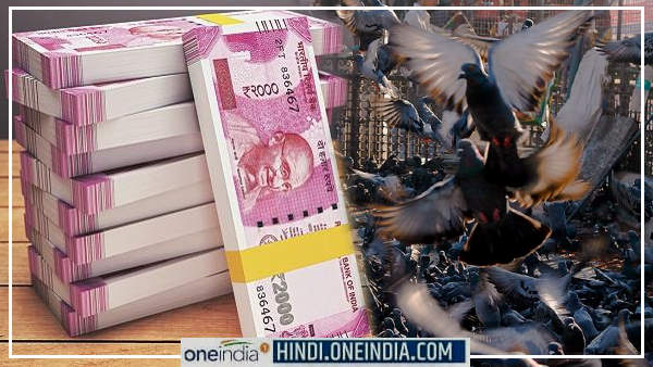 करोड़पति कबूतर : इनके पास 20 करोड़ की जमीन व 30 लाख का बैंक बैलेंस, जानिए कैसे बने ये इतने अमीर?
