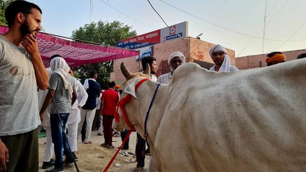 थानों का घेराव कर रहे किसानों ने घर से गाय लाकर बांधी, कहा- अब सभी अपने मवेशियों को यहीं लाएंगे