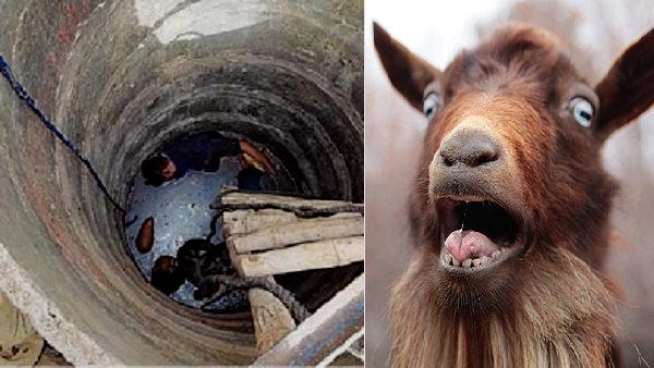 कुएं में गिरी बकरी को बचाने उतरे 2 युवकों का दम टूटा, 2 अन्य बेहोश, आखिर अंदर ऐसा क्या था?