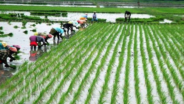 किसानों को बड़ा तोहफा, खरीफ की फसलों की MSP में 50 प्रतिशत से ज्यादा की बढ़ोतरी