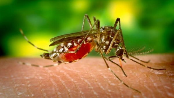 ओडिशा के मलेरिया नियंत्रण मॉडल को डब्ल्यूएचओ ने 'सर्वश्रेष्ठ अभ्यास' के रूप में दर्ज किया