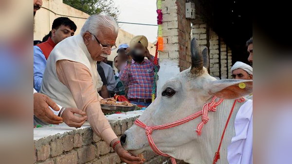 हरियाणा: गौशालाओं में लगेंगे सोलर प्लांट, CM बोले- सभी जिलों में गायों के लिए अस्पताल भी खुलें