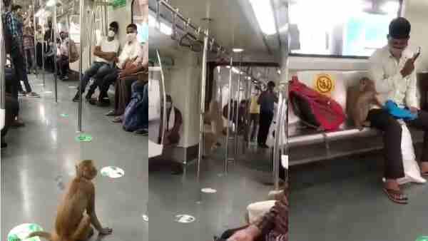 ये भी पढ़ें:-दिल्ली मेट्रो के अंदर बंदर ने किया सफर, यात्रियों संग बैठा..शीशे से लिए बाहर के नजारे