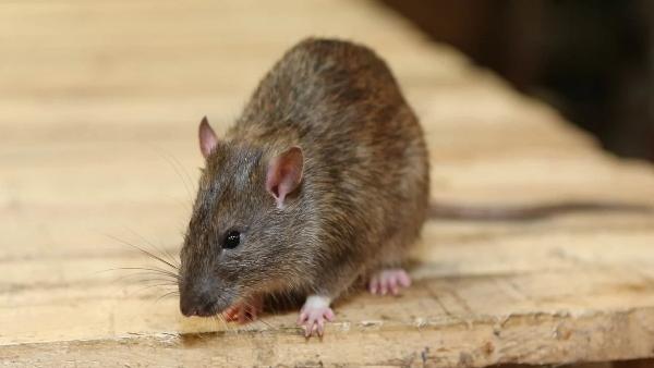इसे भी पढ़ें- गजब! 6 साल तक अंतरिक्ष में फ्रीज करके रखा गया चूहे का स्पर्म, वापस धरती पर आया तो पैदा हुए स्वस्थ बच्चे