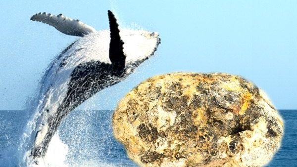 मछली पकड़ने समंदर में गये थे मछुआरे, हाथ लगी व्हेल की उल्टी और बन गये करोड़पति