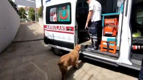 WATCH: मालकिन पड़ी बीमार तो एंबुलेंस के पीछे-पीछे भागता कुत्ता पहुंचा अस्पताल, वफादारी की भावुक कहानी