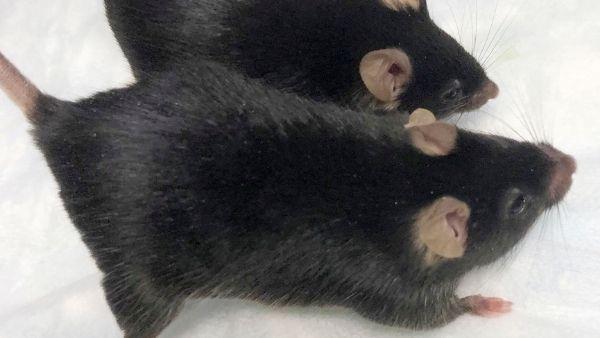 चमत्कार: मंगल ग्रह पर बच्चे पैदा कर सकेगा इंसान! चूहों के स्पर्म पर अंतरिक्ष में किया गया रिसर्च कामयाब
