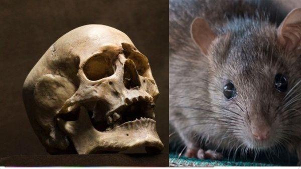 5 हजार साल पहले दुनिया में प्लेग से हुई थी पहली मौत, खोपड़ी में मिले स्ट्रेन के अजीब सबूत
