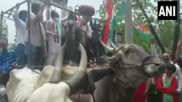 <strong>VIDEO: कांग्रेस के धरना प्रदर्शन में टूटी बैलगाड़ी, समर्थकों के साथ नीचे गिरे मुंबई कांग्रेस अध्यक्ष</strong>