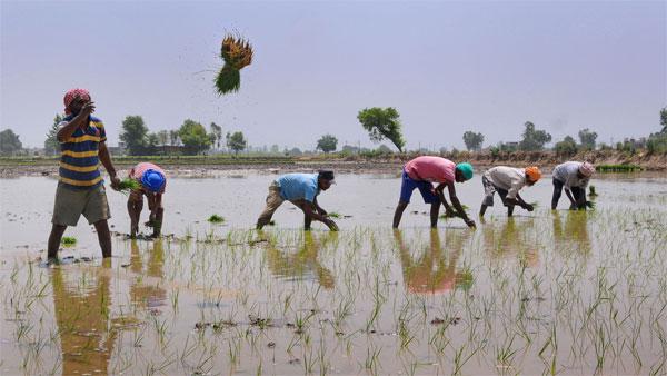 यह पढ़ें:मानसून की धीमी रफ्तार से किसानों खरीफ फसल की बुवाई पिछड़ी