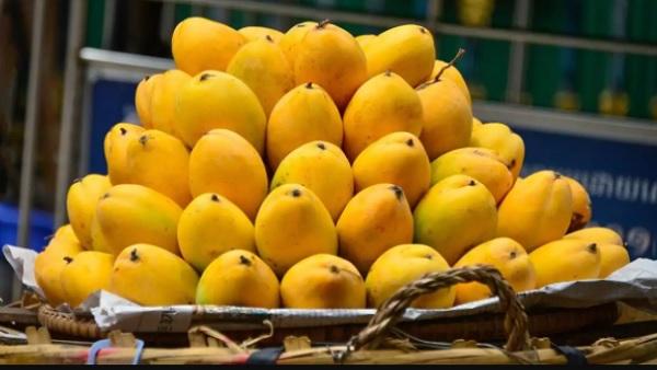 National Mango Day: आम सबसे पहले कहां पाया गया, 'फलों के राजा' के बारे में ये 5 बातें शायद ही जानते होंगे आप