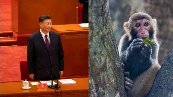 अब China में बंदर से निकले खतरनाक Virus से फैला संक्रमण, पशु चिकित्सक की मौत की पुष्टि, लैब में करता था काम