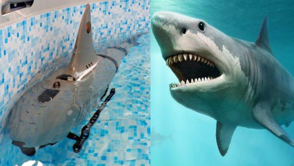 चीन ने बढ़ाई टेंशन, बना डाला शार्क जैसे दिखने वाला रोबोट, चुपके से जहाजों को कर सकता है तबाह