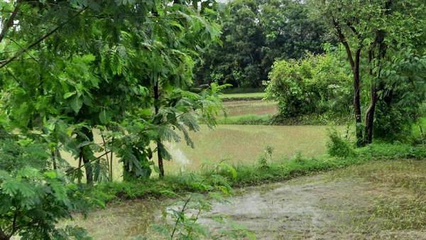बारिश से गुजरात में नदी-नाले उफान पर, बांध भरे, दमन दीव के किसान हुए संतुष्ट, उनकी खरीफ की 90% बुवाई पूरी हुई, बोले- अब थम जाए वर्षा
