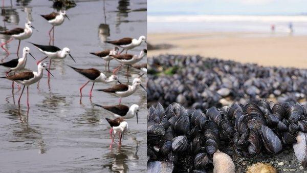 अमेरिका में प्रचंड धूप से हाहाकार, झुलसे पक्षियों के पंख, कनाडाई समुद्र में पानी उबलने से करोड़ों जीव मरे
