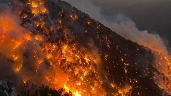 तुर्की में 60 से ज्यादा जंगलों में लगी प्रचंड आग, जान बचाकर भागते लोग, हजारों जानवर जिंदा जले, खौफनाक वीडियो