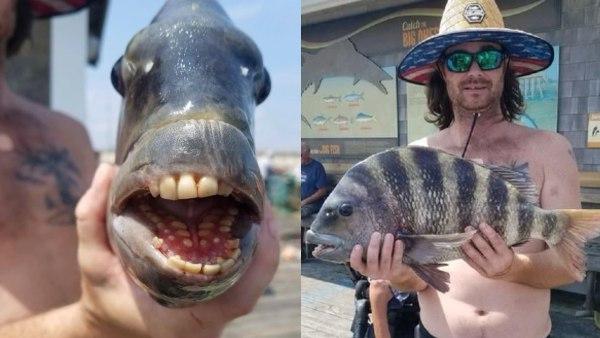 मछुआरे के हाथ लगी अजीबो-गरीब मछली, इंसानों जैसे दांत, शरीर पर काली-सफेद धारियां