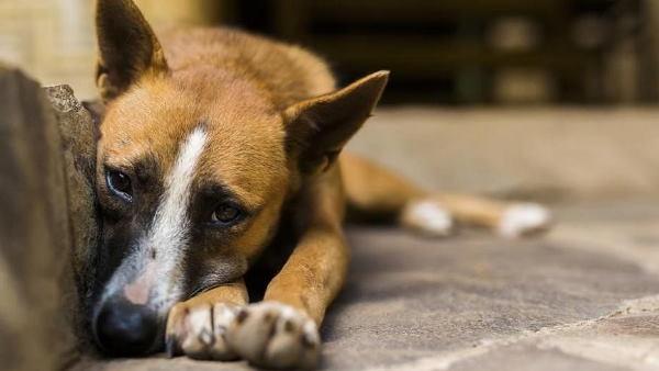 सड़क किनारे कुत्ते के साथ गलत काम करता मिला युवक, महिला ने यूं सिखाया सबक