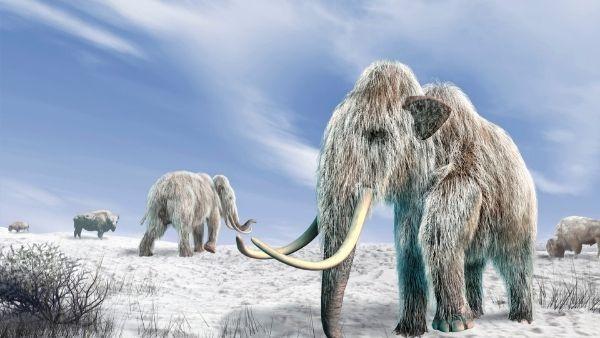 इसे भी पढ़ें-हजारों साल पहले लुप्त हो चुके थे घातक हाथी, चलने से थर्राती थी धरती, अब उन हाथियों का होगा पुनर्जन्म