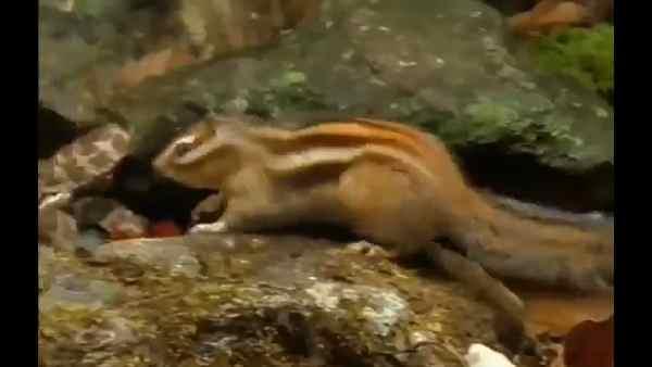 सांप और गिलहरी की भीषण लड़ाई