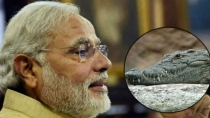 Birthday Special Brave Narendra Modi Brought Home A Crocodile From The Pond